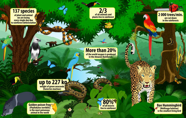 vector rainforest  infographic with animals illustration . Green Tropical Forest jungle with parrots, jaguar, boa, peccary, harpy, monkey, frog, toucan, anaconda and butterflies vector rainforest  infographic with animals illustration . Green Tropical Forest jungle with parrots, jaguar, boa, peccary, harpy, monkey, frog, toucan, anaconda and butterflies javelina stock illustrations