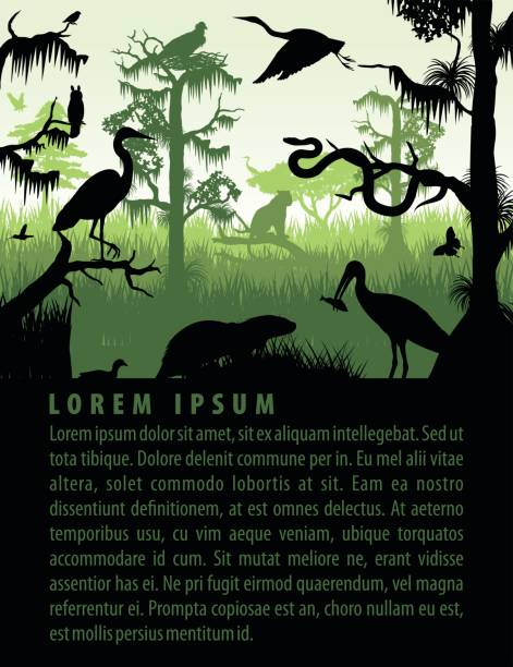 vector rainforest wetland silhouettes in sunset design template with heron, otter, python, ibis. puma, eagle and owl vector rainforest wetland silhouettes in sunset design template with heron, otter, python, ibis. puma, eagle and owl amazon stock illustrations