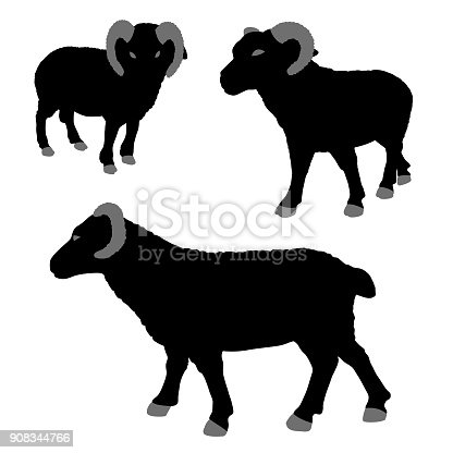istock Vector Ram Silhouettes Isolated on White 908344766