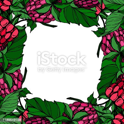 istock Vector Raspberry healthy food fresh berry isolated. Black and white engraved ink art. Frame border ornament square. 1189649158