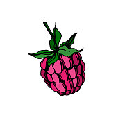 Vector Raspberry healthy food fresh berry isolated. Black and white engraved ink art. Isolated raspberry illustration element on white background.