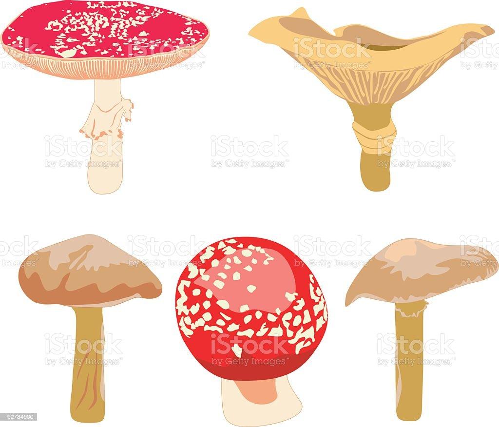Vektor real Pilzen Lizenzfreies vektor real pilzen stock vektor art und mehr bilder von amanita