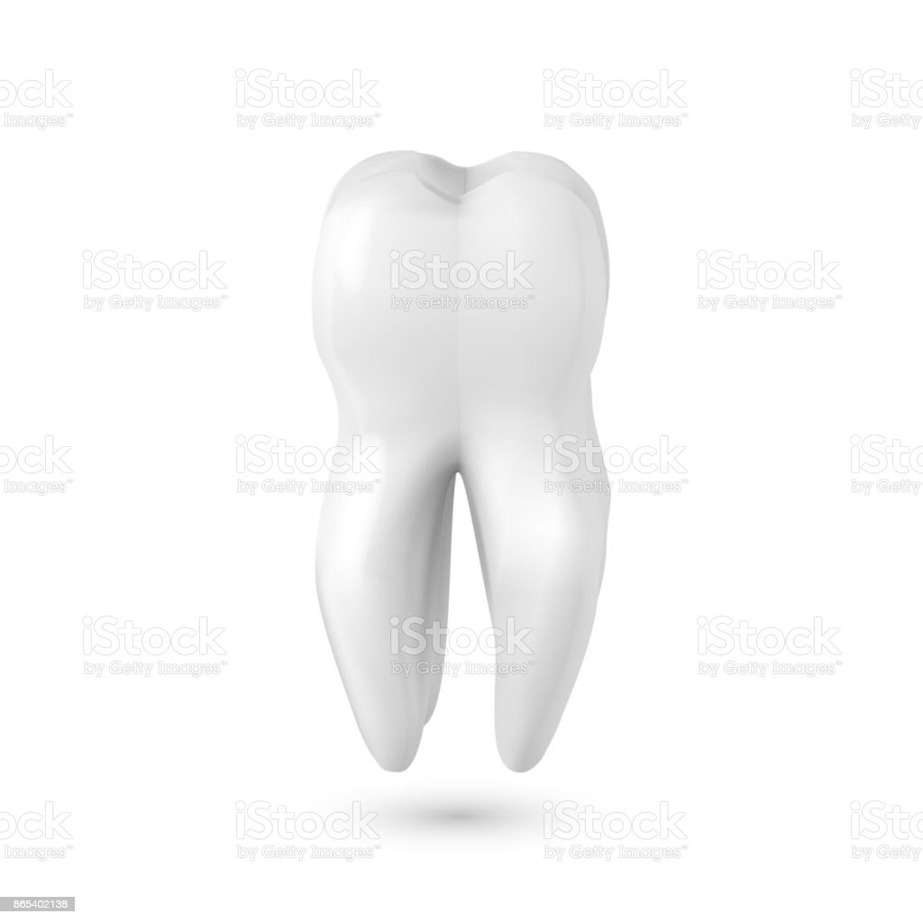 vector realistic 3d tooth healthy teeth care vector product template