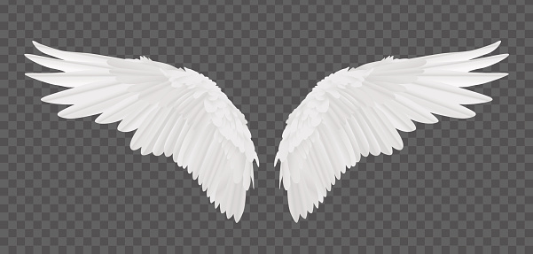 Vector realistic angel wings isolated on transparent background
