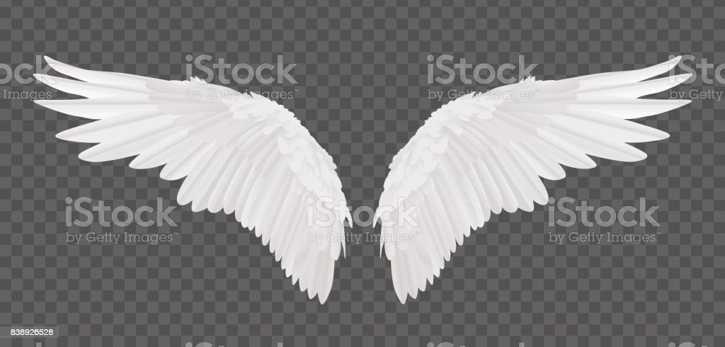 Vector realistic angel wings isolated on transparent background vector art illustration