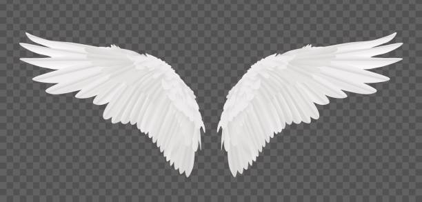 vector realistic angel wings isolated on transparent background - animal wing stock illustrations