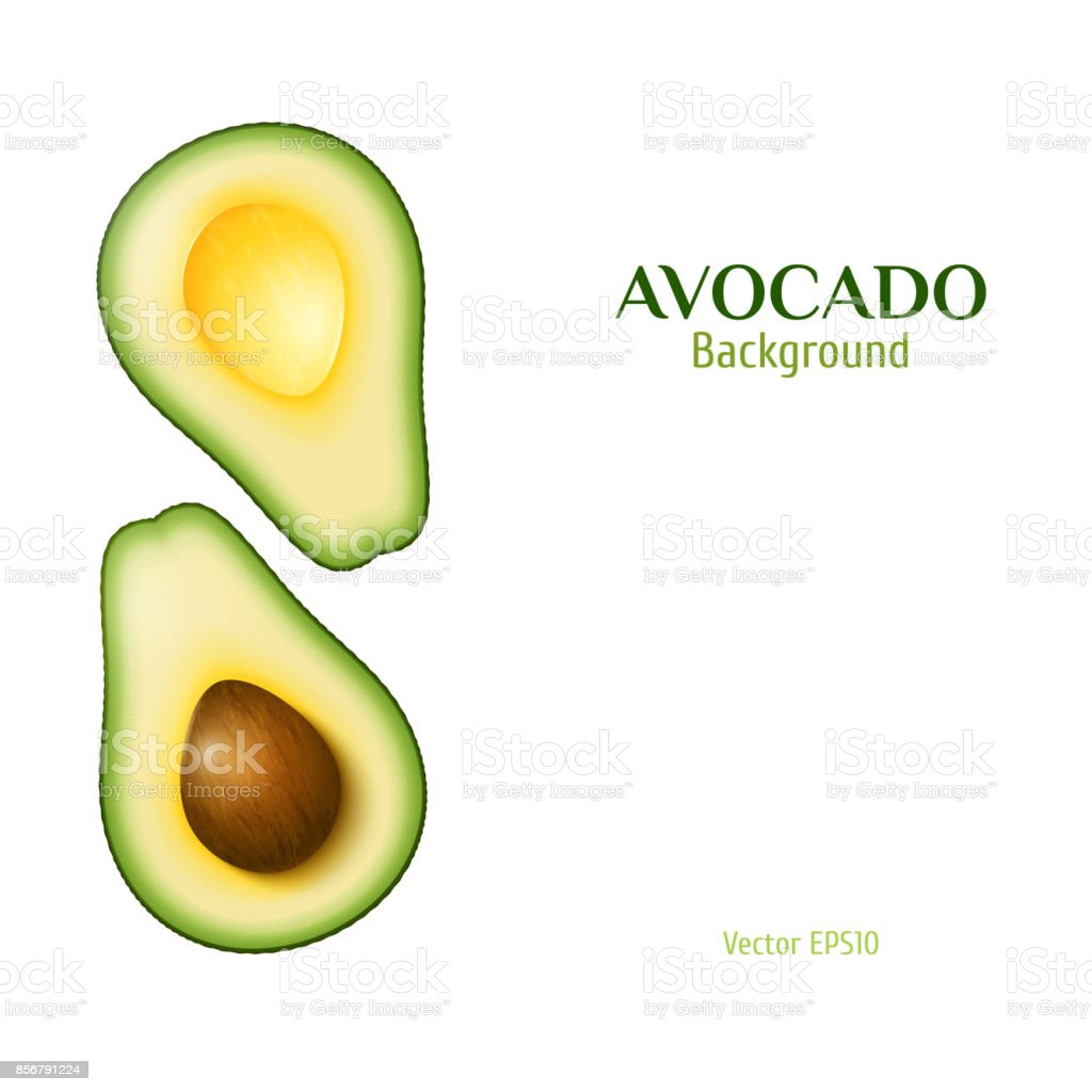 Vector realistic avocado vector art illustration
