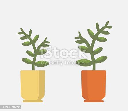 Vector realistic fern in a pot. Ornamental houseplant.
