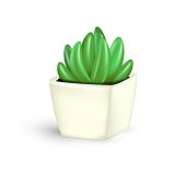 Vector realistic green succulent plant in small pot isolated on white background. Echeveria Pansy purple, beautiful evergreen cactus icon. Succulent fleshy for decoration, print.