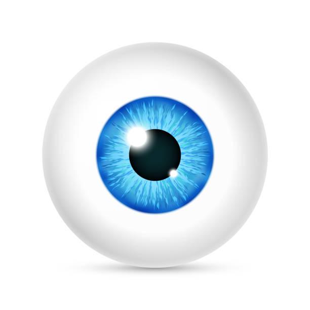 vector realistic human eyeball - глазное яблоко stock illustrations