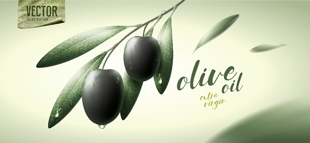 Vector realistic illustration. Black olives, leaves and paper icon.