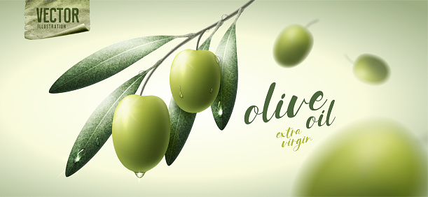 Vector realistic illustration. Green olives, leaves and paper icon.