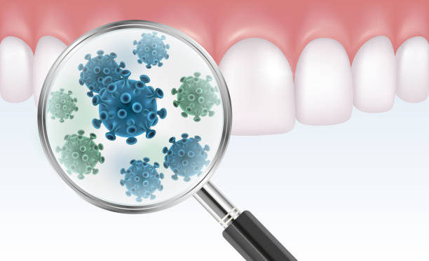 ilustrações de stock, clip art, desenhos animados e ícones de vector realistic illustration of teeth with magnifier showing bacteria - boca suja