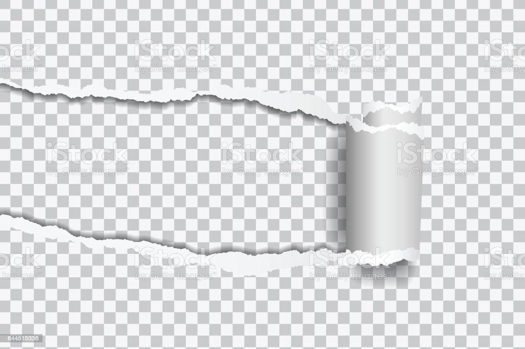 텍스트 프레임 투명 한 배경에 압 연 가장자리 찢어진된 종이의 벡터 현실적인 그림 - 로열티 프리 가장자리 벡터 아트