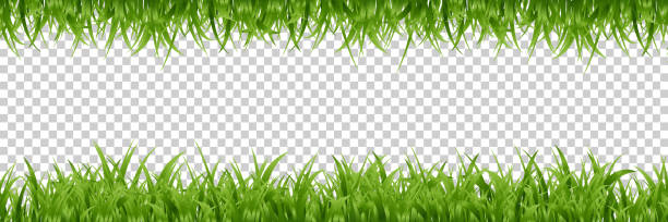 vector realistic isolated green grass borders for decoration and covering on the transparent background. - grass stock illustrations