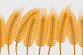 Vector realistic isolated seamless pattern of wheat on the transparent background. Concept of bakery, autumn season, organic food and harvest.