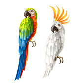 Realistic exotic parrot set. Colorful macaw, and white cockatoo. Vector wild tropical birds with bright feather. Summer holiday design animals.