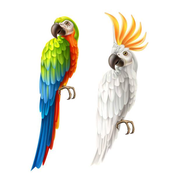 ilustrações de stock, clip art, desenhos animados e ícones de vector realistic parrots macaw and cockatoo set - arara