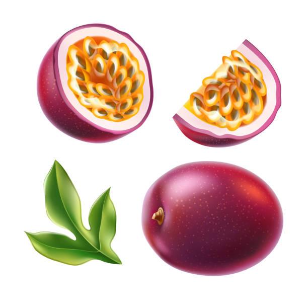 illustrations, cliparts, dessins animés et icônes de fruit de la passion réaliste de vecteur avec la feuille verte de graine - fruit de la passion