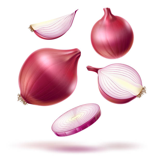 vector realistic red onion whole bulb slices mix - onion stock illustrations