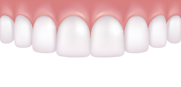 Vector realistic row of white and atraight upper teeth - dentistry medical model