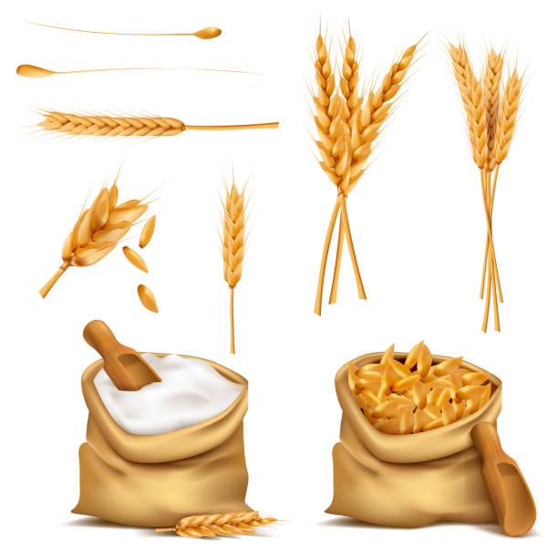 Vector realistic set cereals 3d icon Vector set realistic canvas bags full of grains or cereals, flour, spikes. Harvest of wheat, rye, barley, oat. 3d illustrations, print, design elements spelt stock illustrations