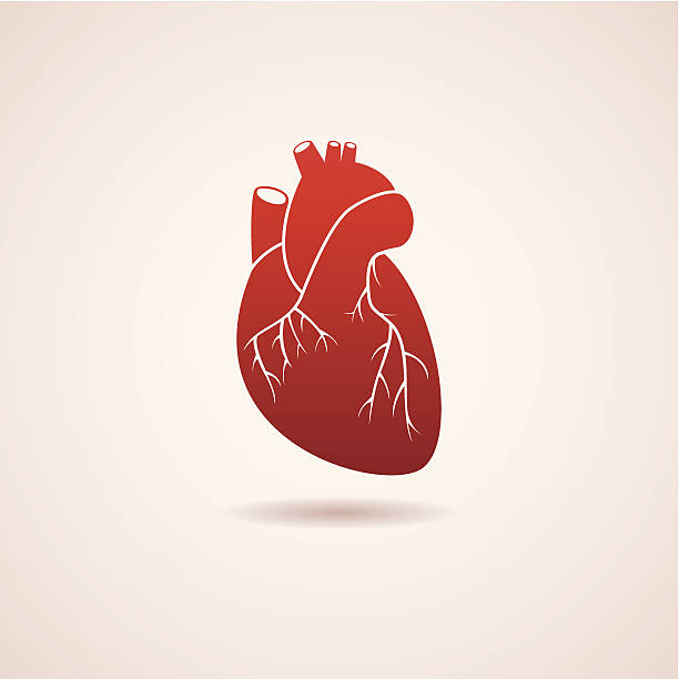 vector red human heart icon vector red human heart icon. EPS10. Contains transparent objects medical illustrations stock illustrations