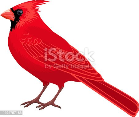 istock vector Red Male Northern Cardinal - state bird 1194757163