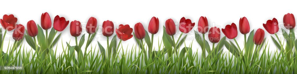 vector red tulips and grass vector art illustration