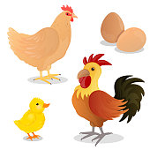 Vector Rooster, Hen, Chick and Eggs