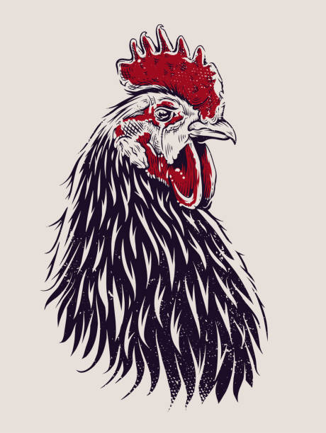 Vector Rooster Illustration Vector Rooster Illustration. Engraving style cock. cockerel stock illustrations