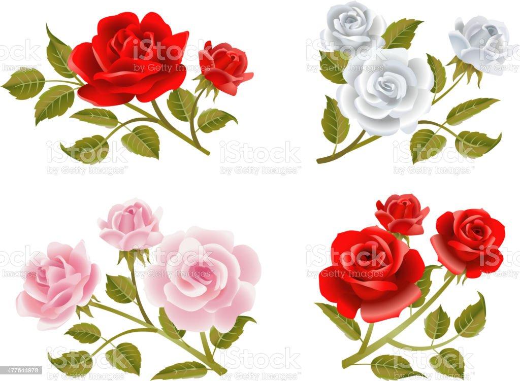 Vector rose buttonholes vector art illustration