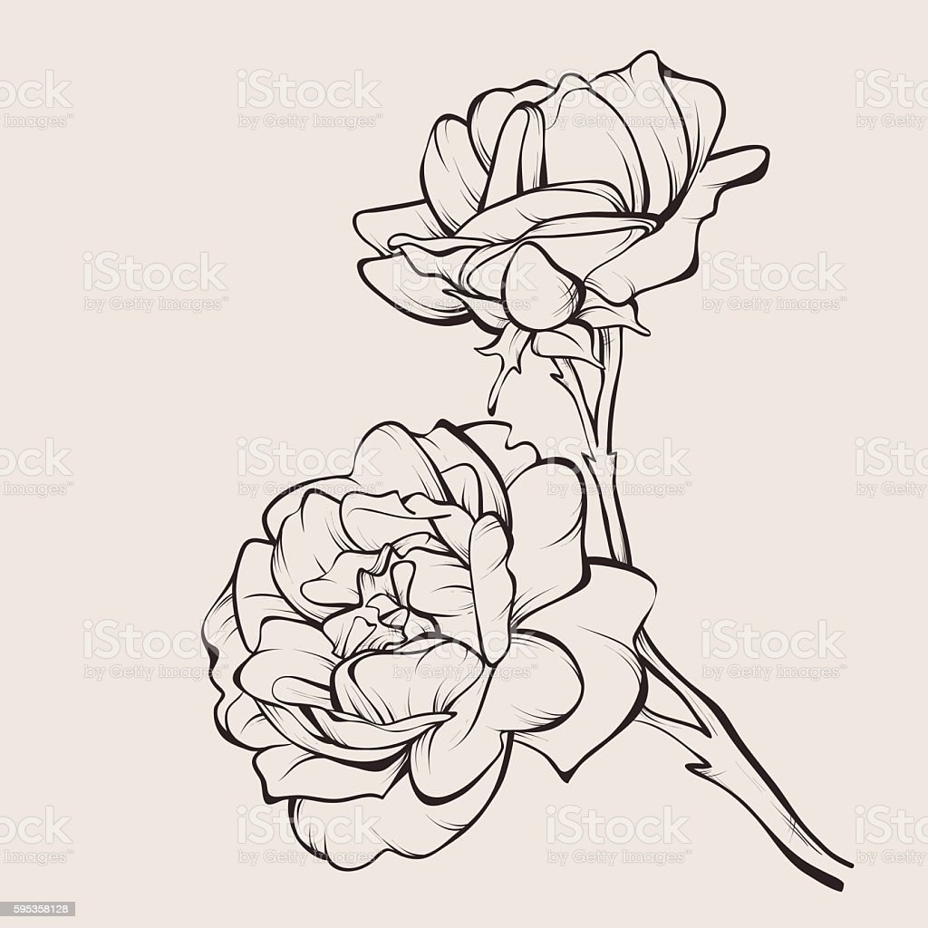 Vector rose flower isolated on white. – Vektorgrafik