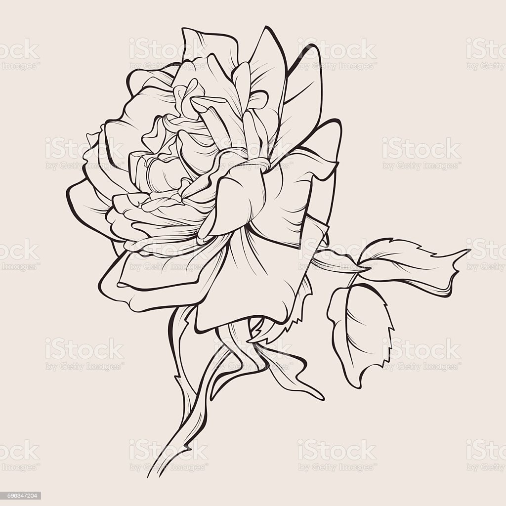 Vector rose flower isolated. – Vektorgrafik