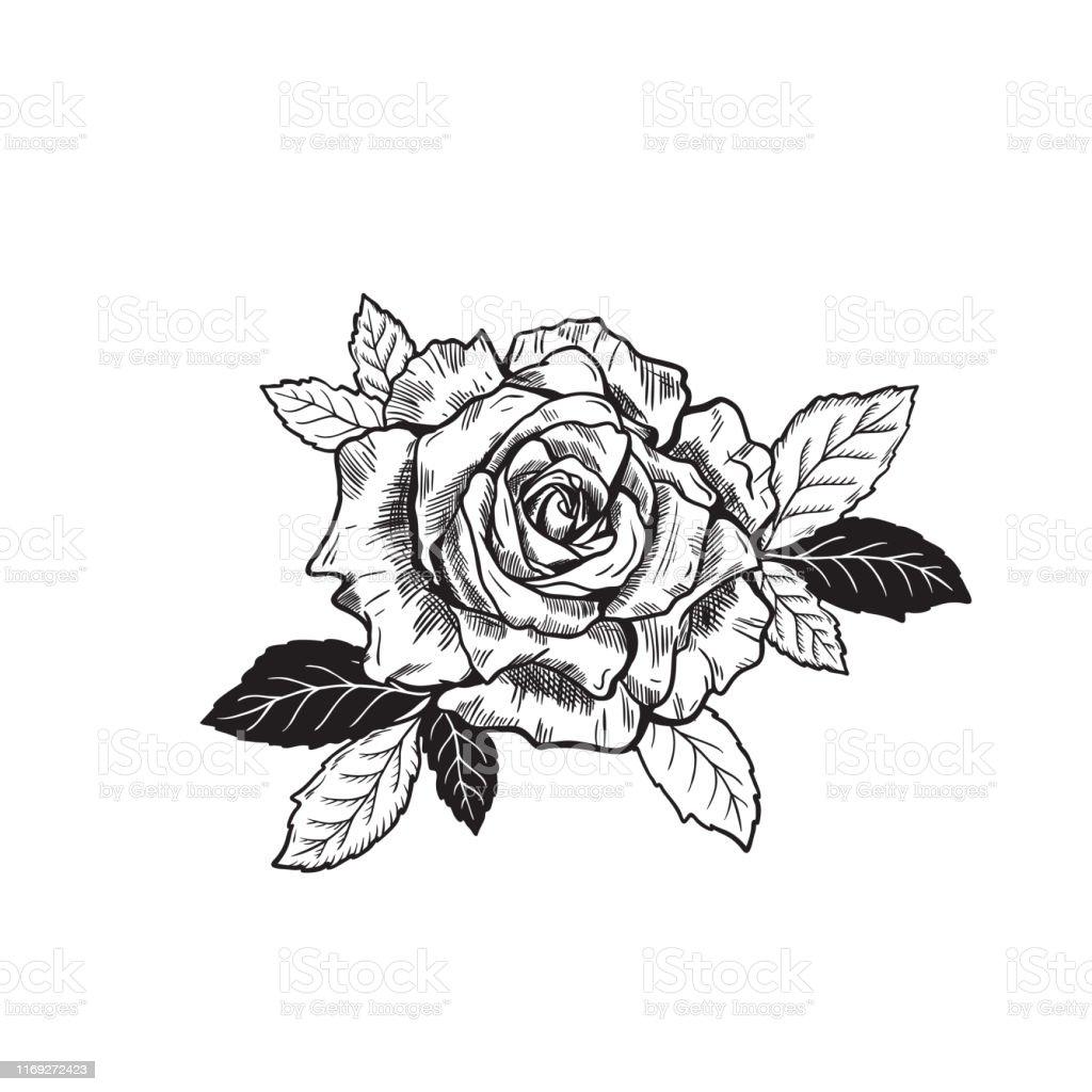 Dessin De Croquis De Tatouage De Fleur De Rose De Vecteur Vecteurs