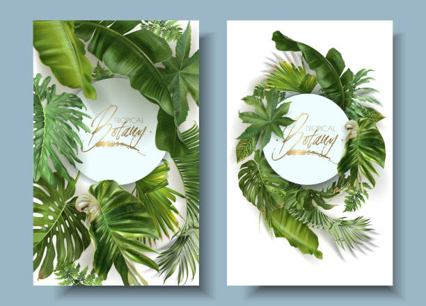 Vector round banners with green tropical leaves Vector round banners with green tropical leaves on white background. Exotic botanical design for cosmetics, spa, perfume, beauty salon, travel agency, florist shop. Best as wedding invitation cards banana borders stock illustrations
