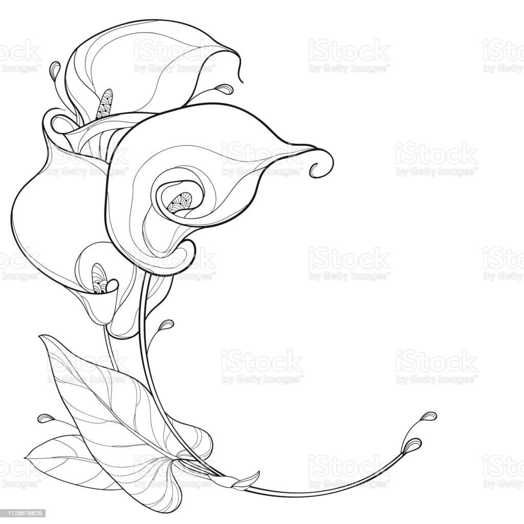 Vector Round Bouquet Of Outline Calla Lily Flower Or Zantedeschia