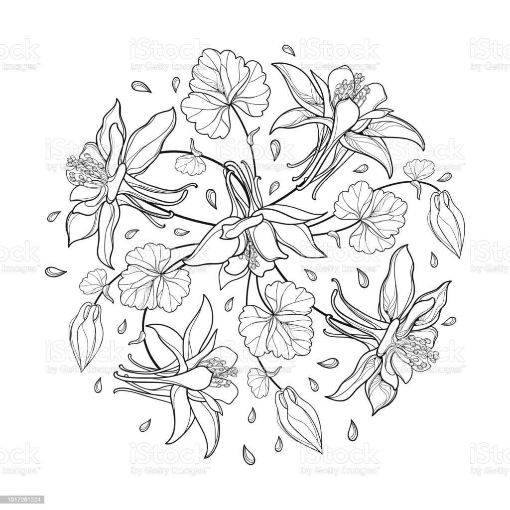 Vector Round Bouquet With Outline Aquilegia Or Columbine Flower Bud