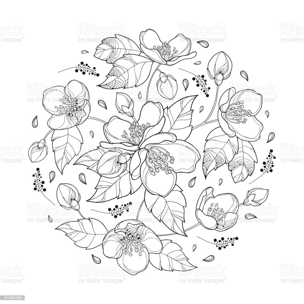Vector round bouquet with outline jasmine flower bunch bud and ornate leaves in black isolated on white background illustration