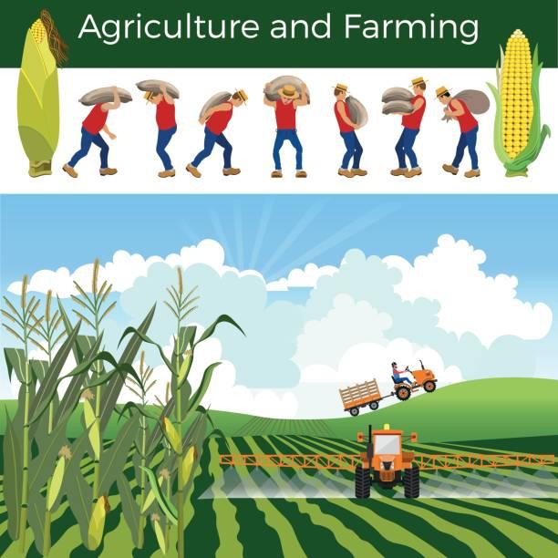 vector rural landscape - corn field stock illustrations, clip art, cartoons, & icons