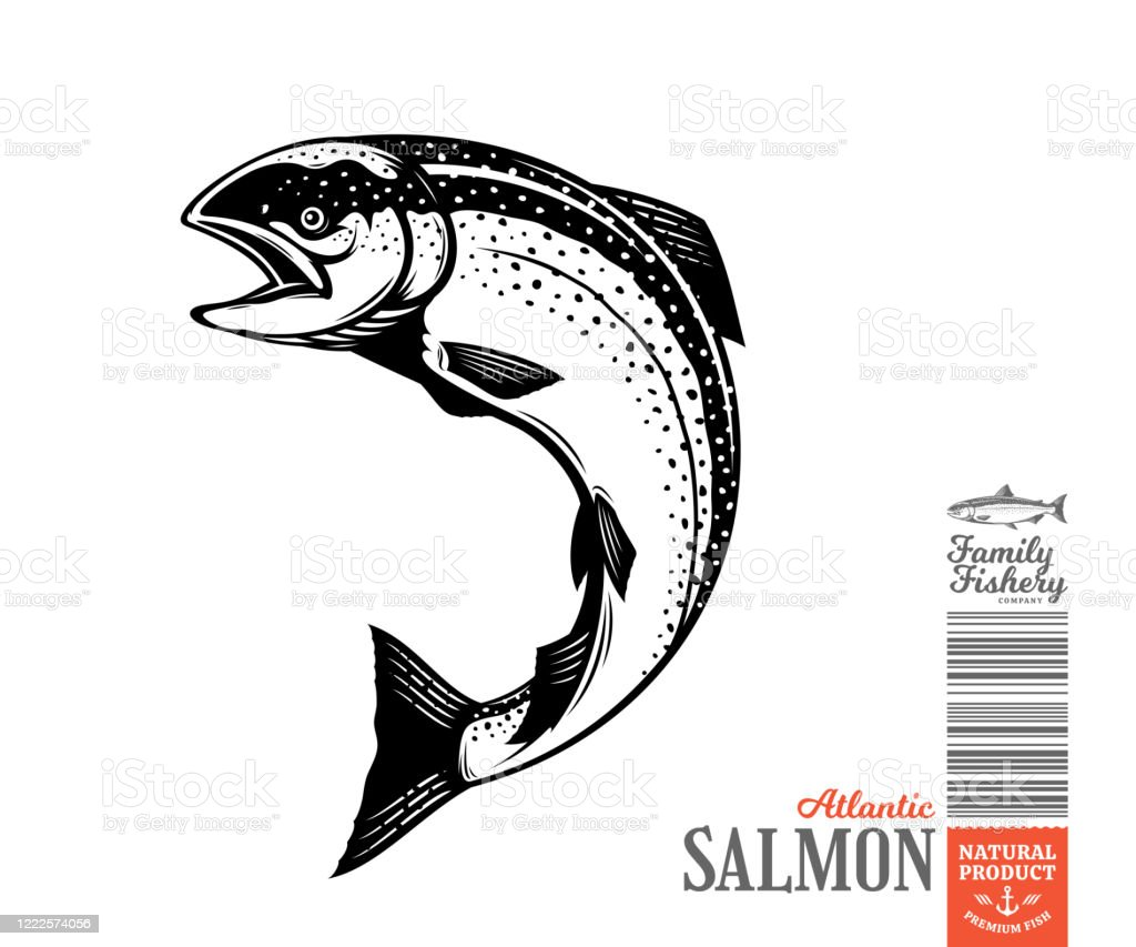 vector salmon fish illustration stock illustration download image now istock vector salmon fish illustration stock illustration download image now istock