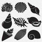 Vector sea shells black silhouettes isolated on the transperant background