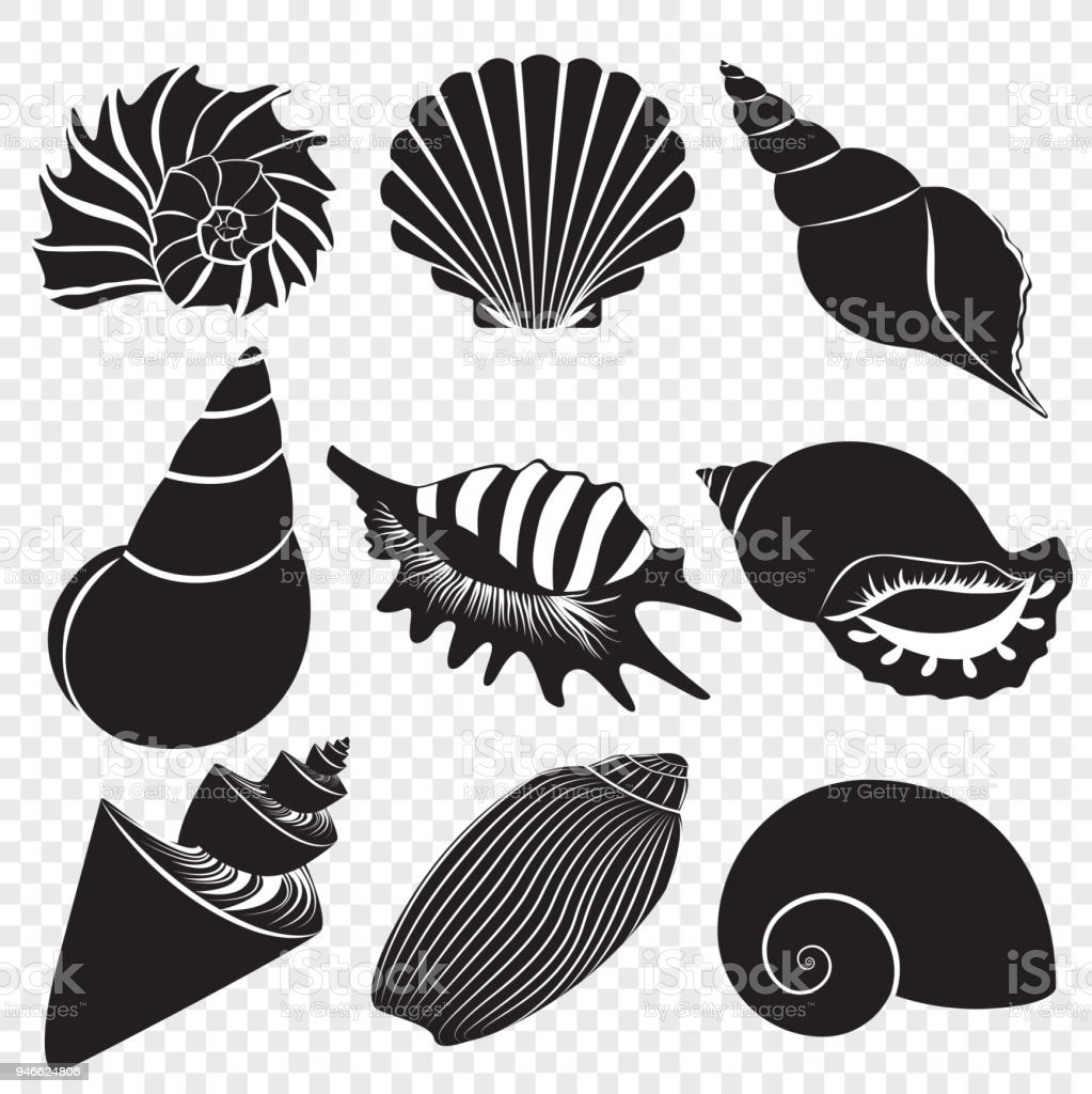 Vector sea shells black silhouettes isolated on the alpha transperant background. vector art illustration