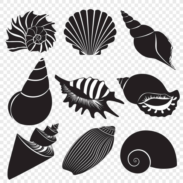 vector sea shells black silhouettes isolated on the alpha transperant background. - seashell stock illustrations, clip art, cartoons, & icons