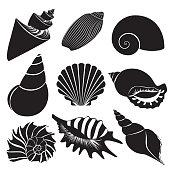 Vector sea shells. Seashell silhouettes set collection