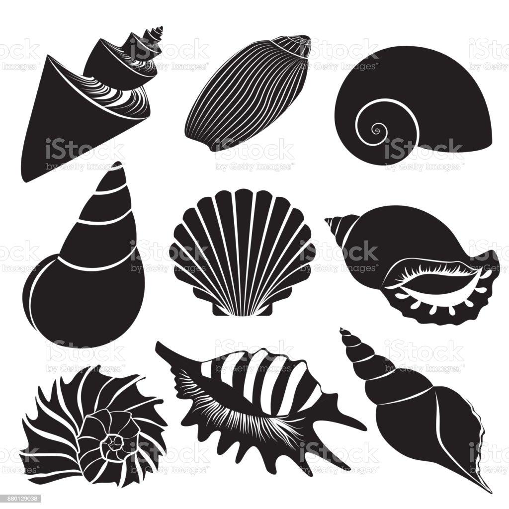 Vector sea shells. Seashell silhouettes set isolated. vector art illustration