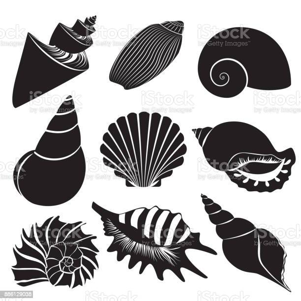 Vector sea shells. Seashell silhouettes set collection