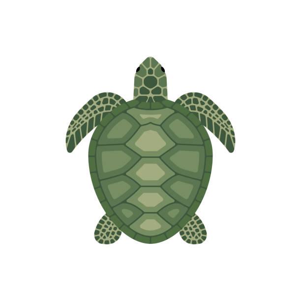 vector sea turtle - turtle stock illustrations