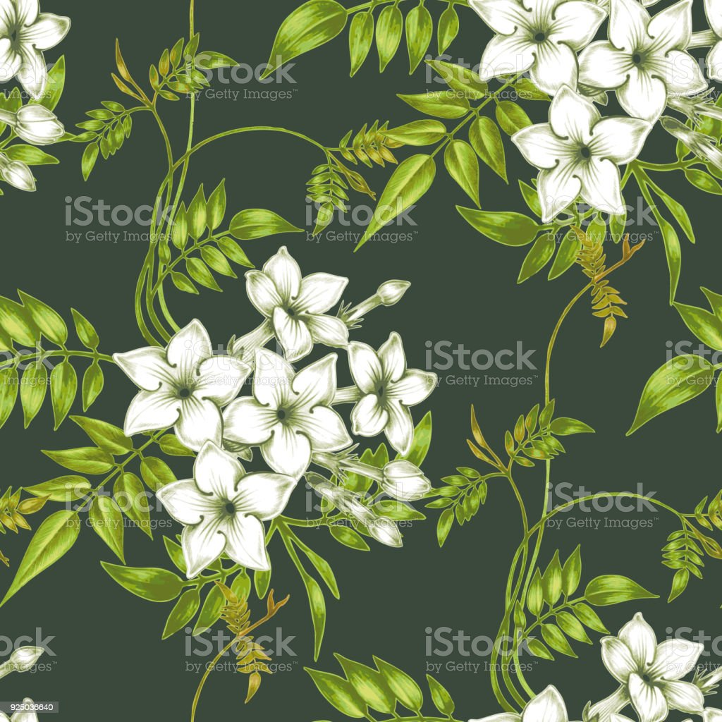 Vector Seamless Floral Pattern With Jasmine Flowers Stock Vector Art