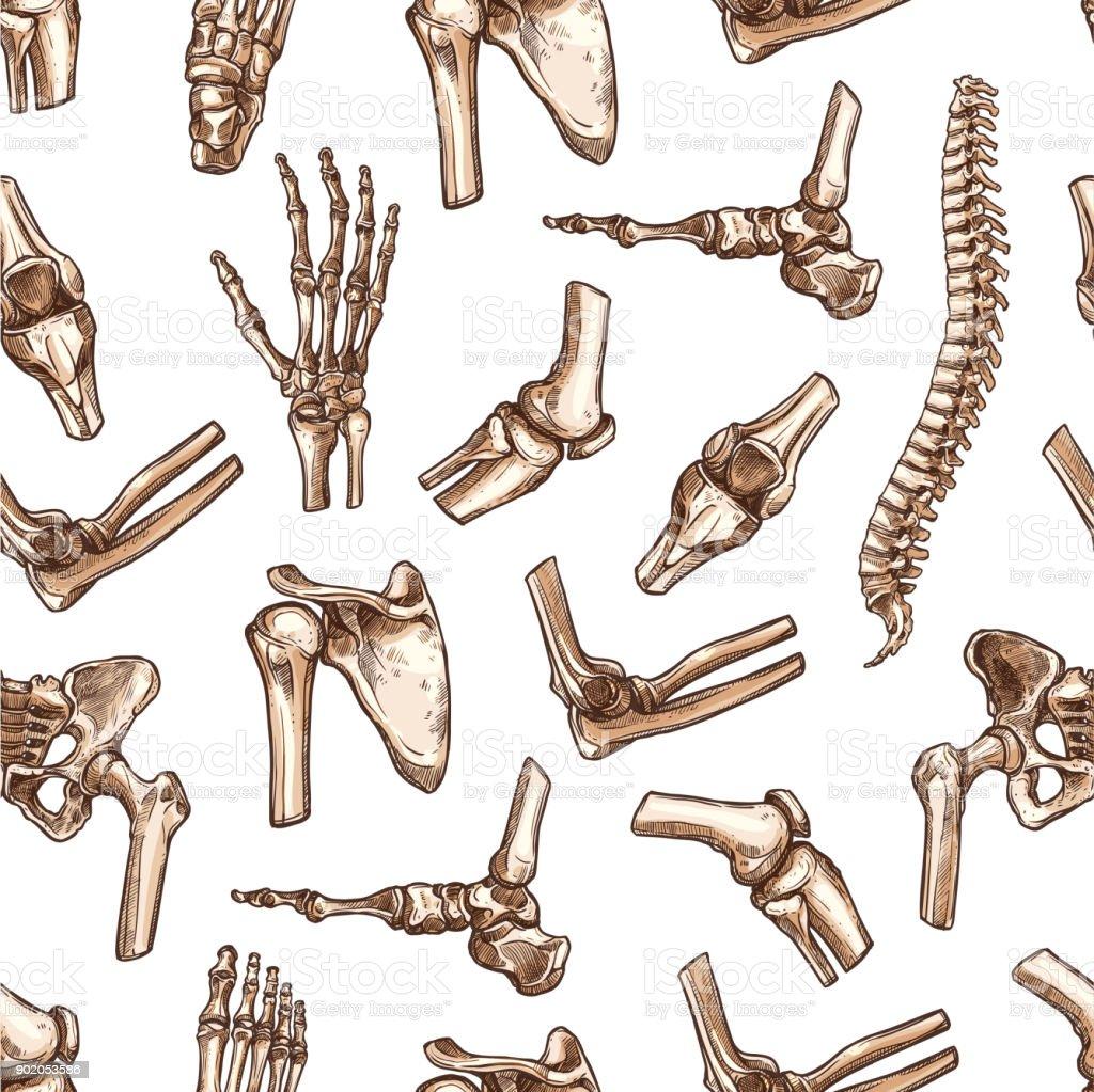 Skizzieren Sie Vektor Musterdesign Menschlichen Körper Knochen Stock ...